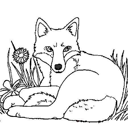 Dessin renard a colorier coloriages pinterest - Renard en dessin ...