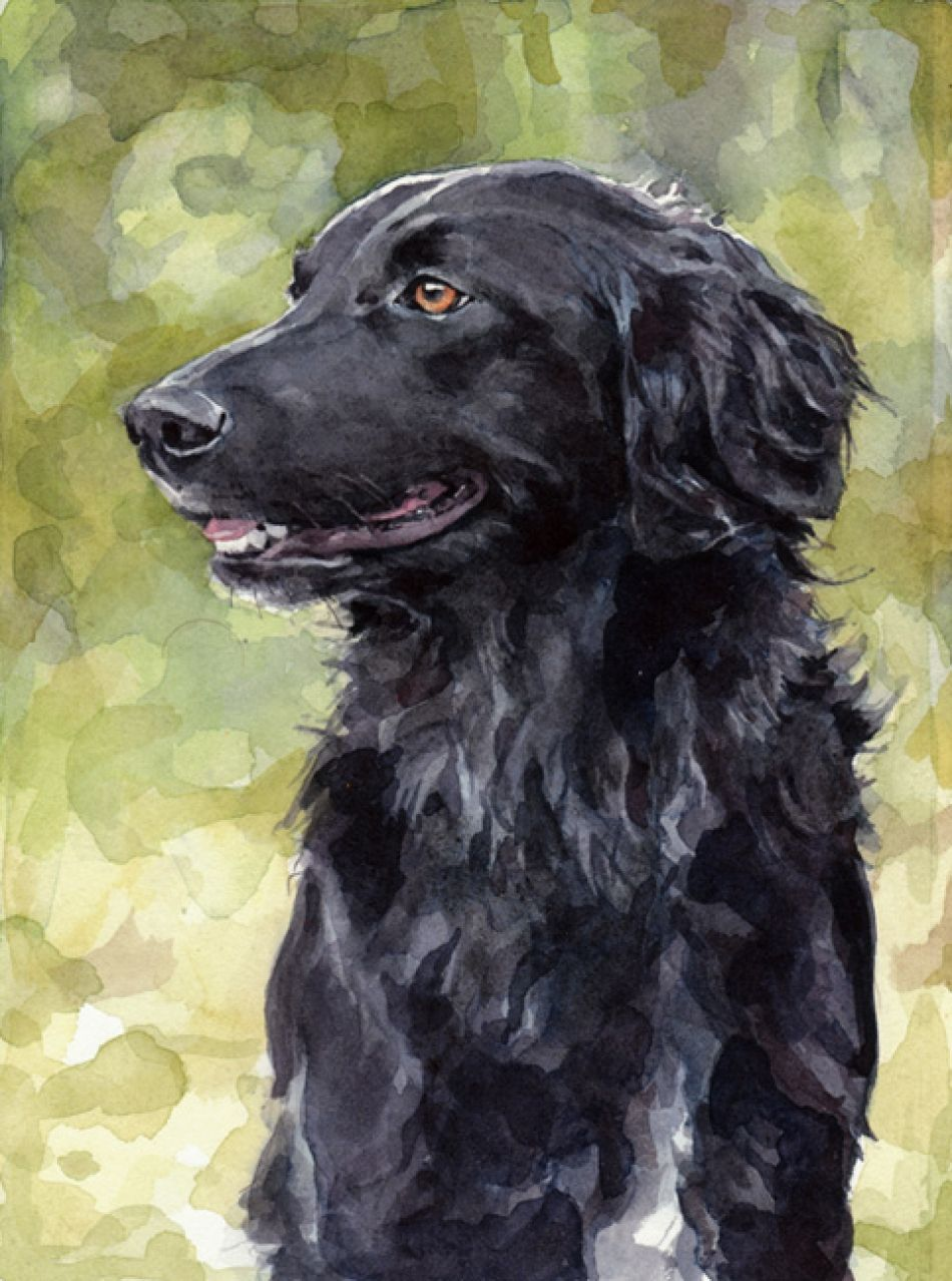 Black Retriever Watercolor Painting Dog Watercolor Painting