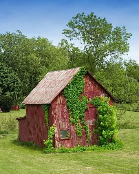 Photograph of Red Barn with Vines