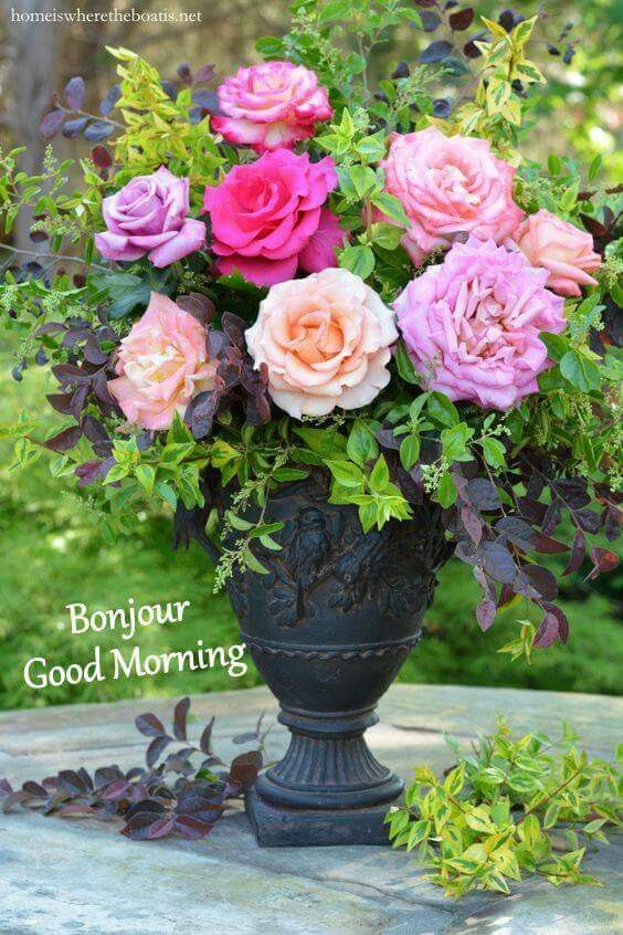 Pin by Linda Wright on Flowers | Pinterest