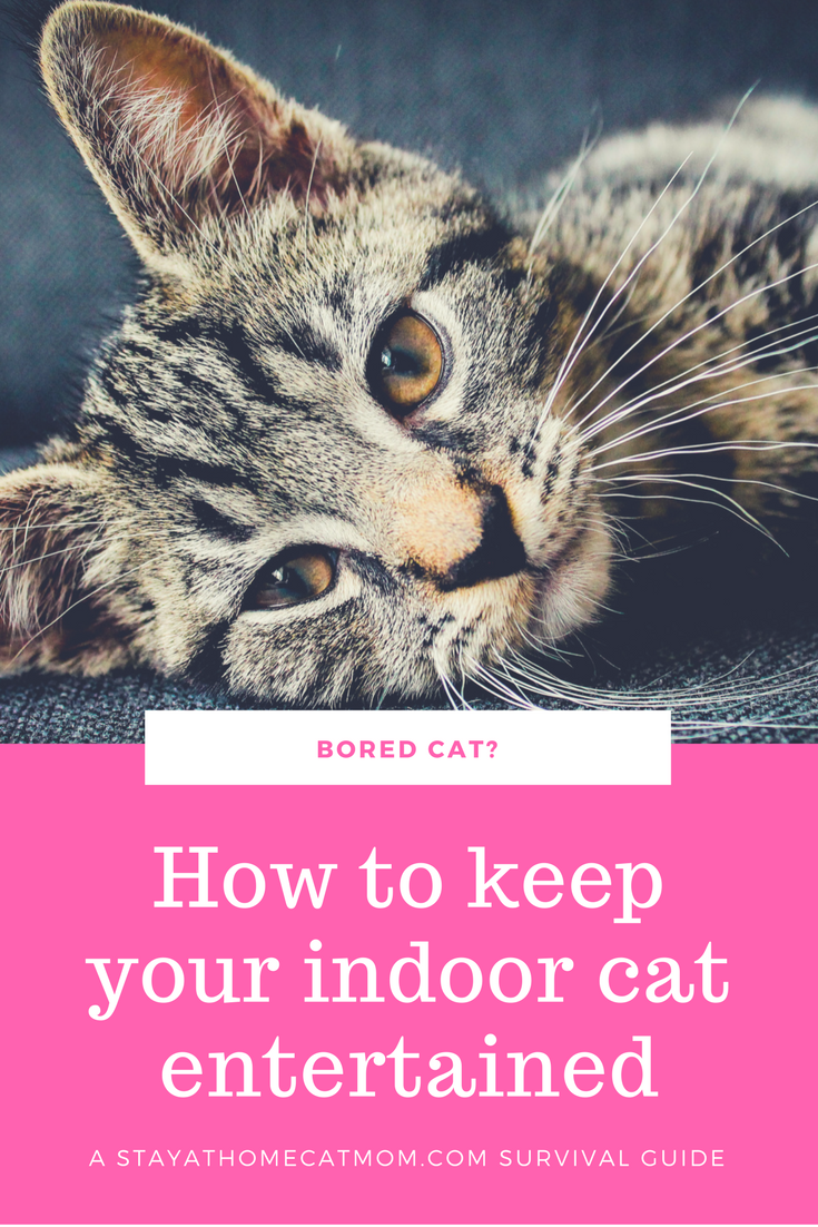 How To Keep Your Indoor Cats Entertained A Cat Mom Survival Guide Stay At Home Cat Mom Indoor Cat Cat Care Cat Entertainment