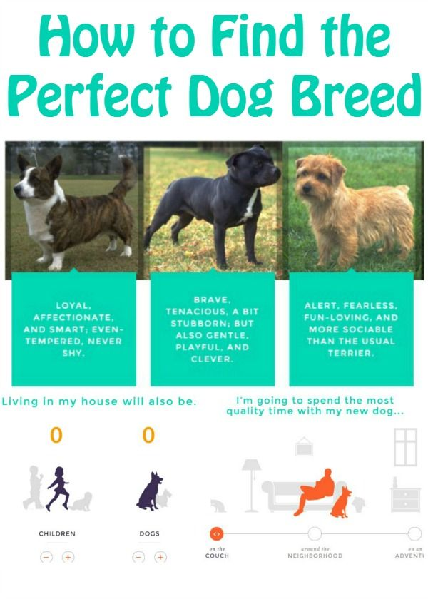 How To Find The Perfect Dog Breed For Your Family The Perfect