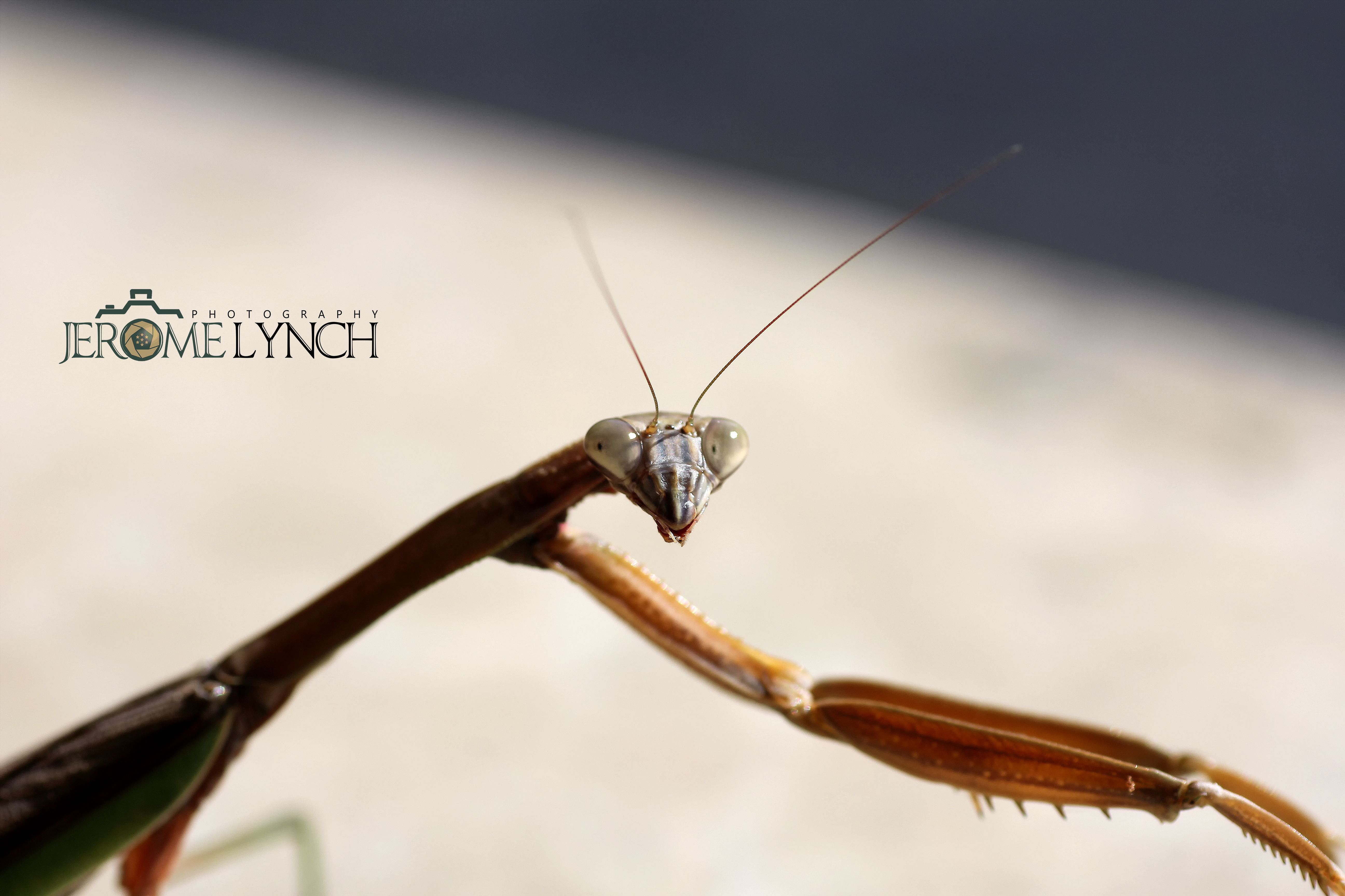 The Praying Mantis Is The Oldest Symbol Of God The African