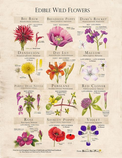 Edible Wild Flowers Fine Art Print — Foraging and Feasting #wildflowers