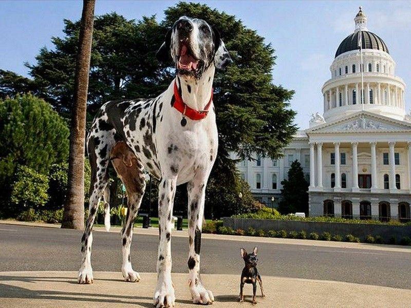 пускает мыльные большая и маленькая собака фото всех коллекционеров лилейников