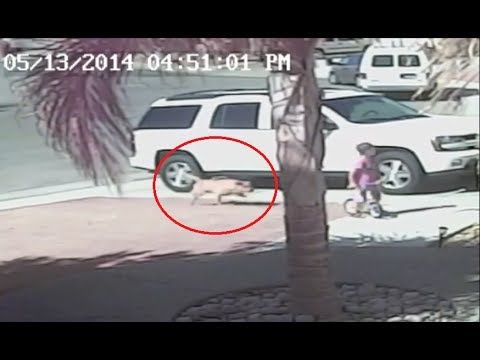 Cat Rescues Little Boy From Dog Attack - Cat saves boy