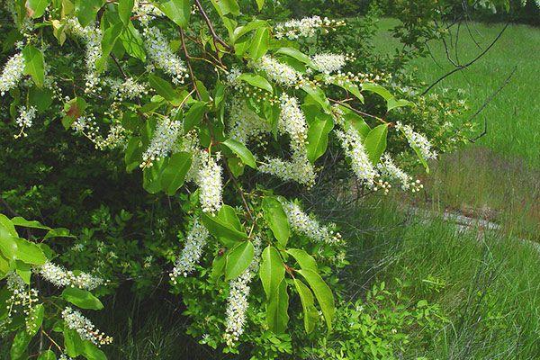 7 Dzikich Roslin Jadalnych Plant Leaves Garden Paths Herbs