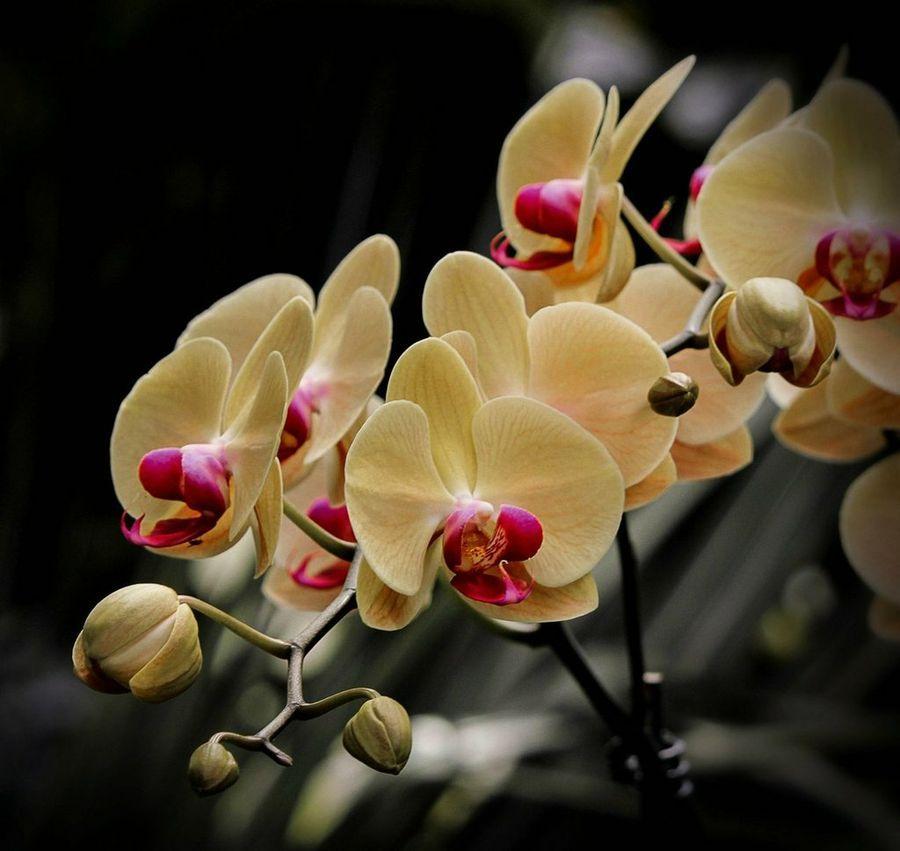 La Orquãdea Es La Flor Mã S Bella Del Mundo â O No Orquideas Cuidados Orquideas Orquidea Phalaenopsis