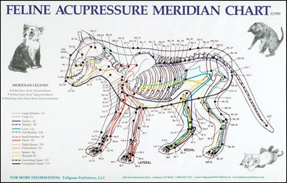 Feline Acupressure Meridian Chart | On The Science of