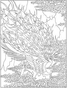 779963 019 Coloring Pages For AdultsPrintable PagesPeacock
