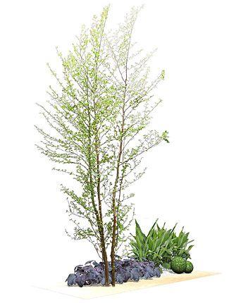 Photo of おすすめ樹木   ガーデニング&エクステリアのことは緑香庭�…