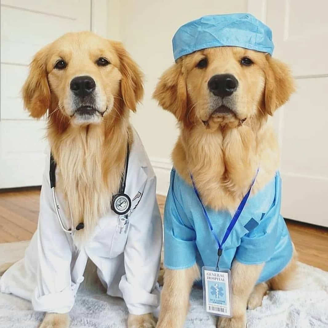 From Medical Way Cute Dog Halloween Costumes Dog Halloween