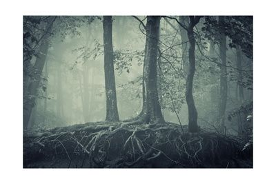 Scary Trees With Roots In A Dark Forest Posters af ando6 på AllPosters.dk