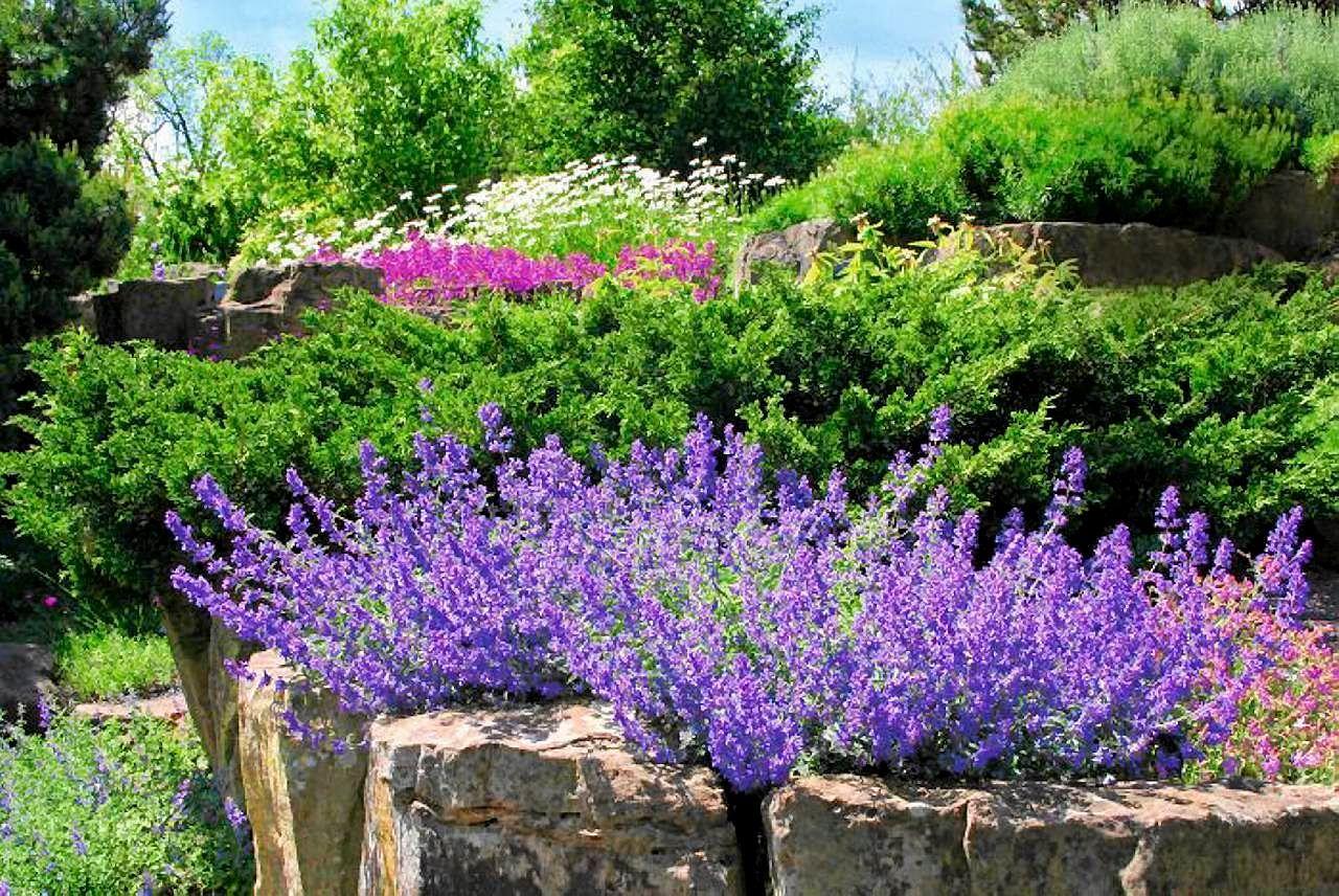 Rosliny Kwitnace Przez Lato Kazdy Marzy O Ogrodzie Pelnym Kwiatow Przez Caly Sezon Okazuje Sie Ze Sa Rosliny Ktore Ulatwiaja Uzyskani Plants Garden Topiary