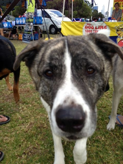 """#45 Entry: """"Max"""".. Owner: Max http://www.thedogline.com.au/boogy-woofy/max"""
