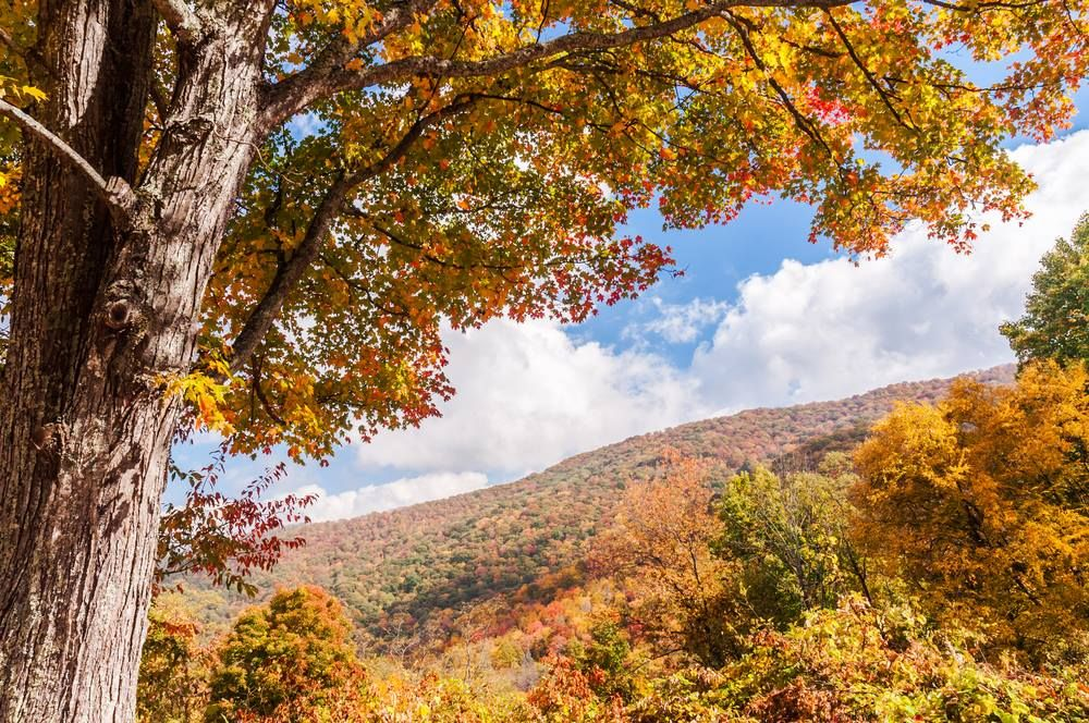 The colors of autumn in the Smoky Mountains