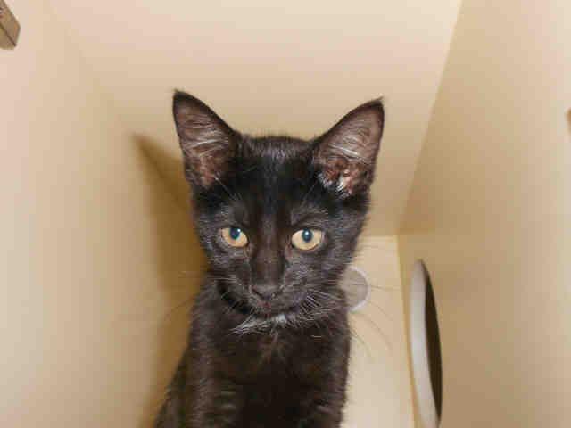 Joey Cuddlebug Pittsburgh Pa Petharbor Com Animal Shelter