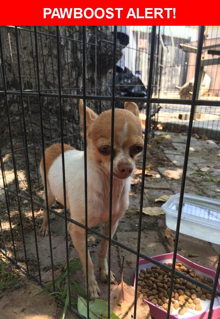 Craigslist Los Angeles Lost Pets - WAYANGPETS.COM
