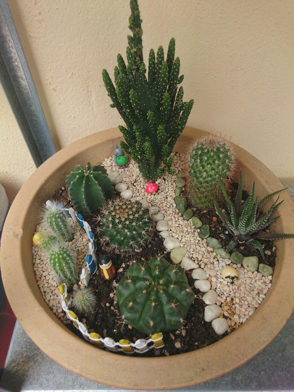 My cactus mini garden cactus plants in pinterest garden