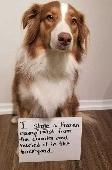 24 Funny Dog Shaming Signs That Will Make you Laugh! Barking Laughs