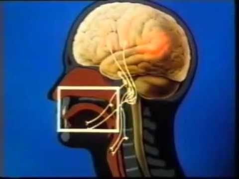 cerebro lenguaje y escritura - YouTube