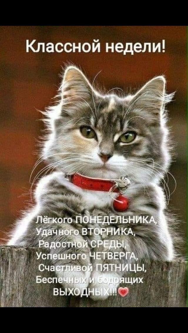 Fotografiya Schastlivaya Pyatnica Yumornye Citaty Yumor O Rabote