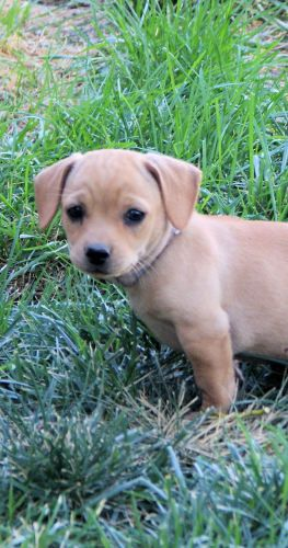 Yellow Lab Puppy With Images Cute Baby Animals Cuddly Animals