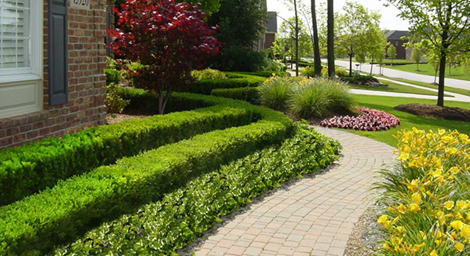 Sidewalk hedge landscape walkway front yard for Garden design ideas with hedges