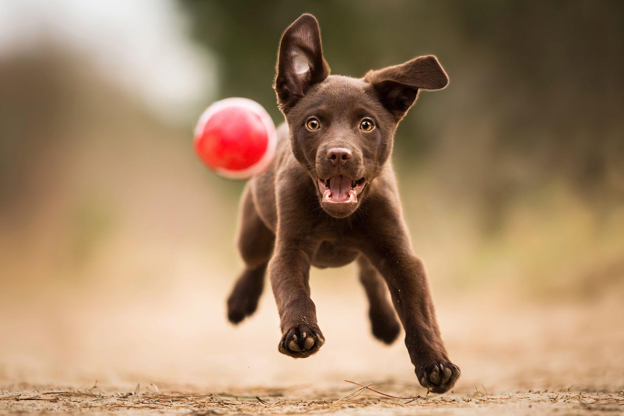 Hundefotografie Tipps & Tricks Hundefotografie, Hunde