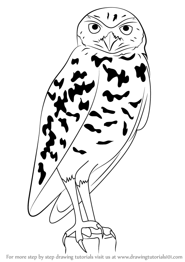 Learn How To Draw A Burrowing Owl Birds Step By Step Drawing