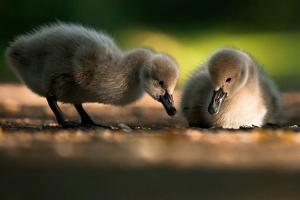 Pin by Casey Ridgeway on Favorite Pics & Sayings | Baby