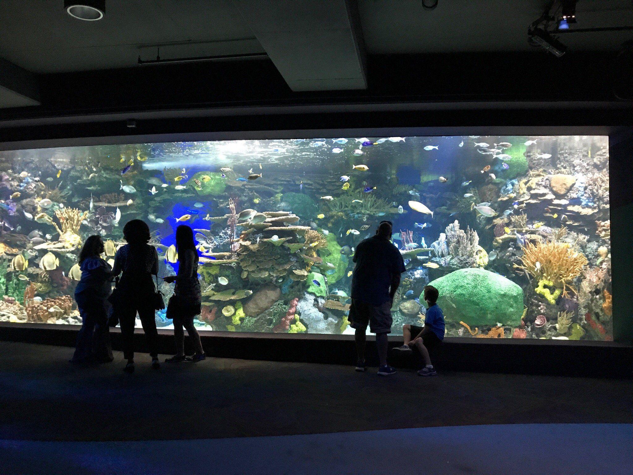 Ripley's Aquarium Of Canada (Toronto) - All You Need to ...