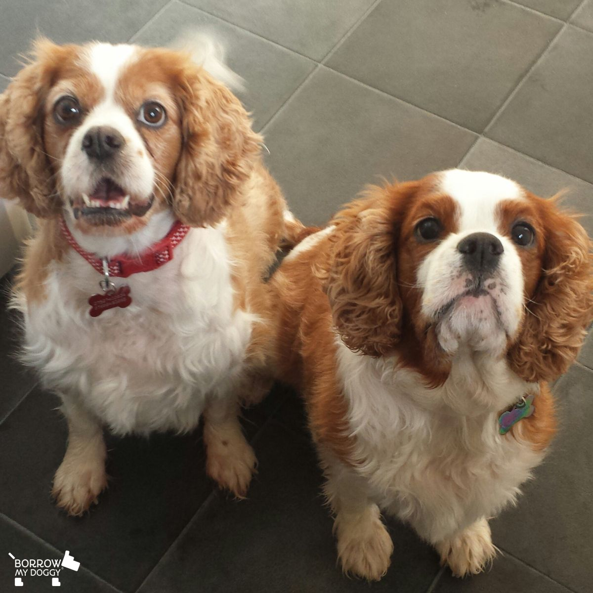 Did you say it's lunchtime :)? #DoggyMembers Bonnie and Lucy