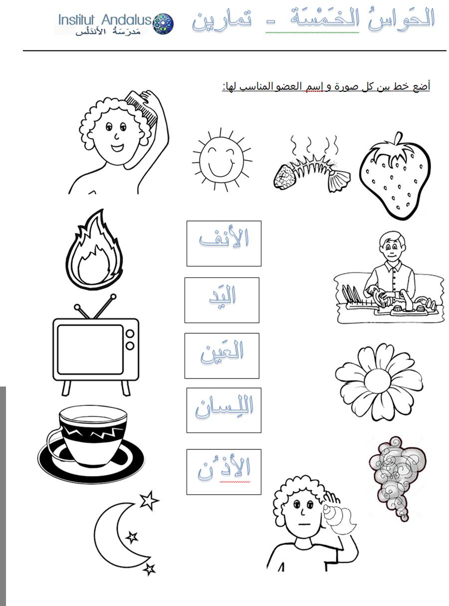 Exercise The Five Senses In Arabic P5 6 [ 1215 x 900 Pixel ]