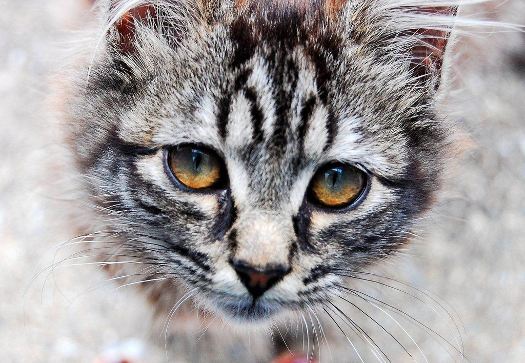 Low cost spay and neuter services Animal articles, Cat