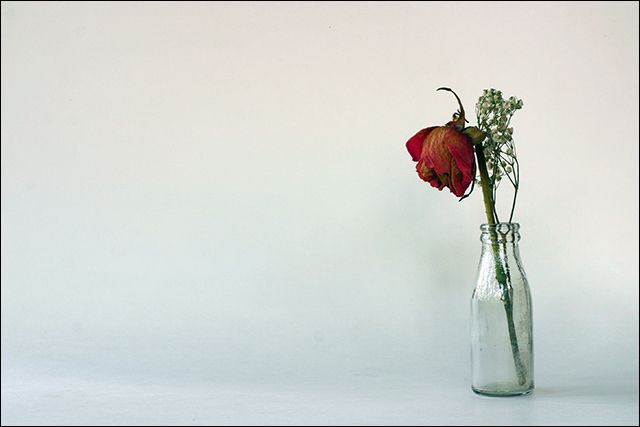 Dead Rose In Vase Google Search Art References Flower Vases