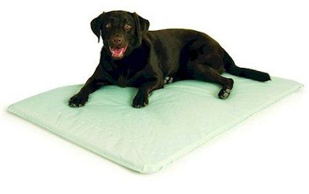 Cool Bed Iii Large Gray 32 X 44 X 05 Read More Reviews Of The Product By Visiting The Link On The Image Dog Bed Large Cool Dog Beds Cool Pets