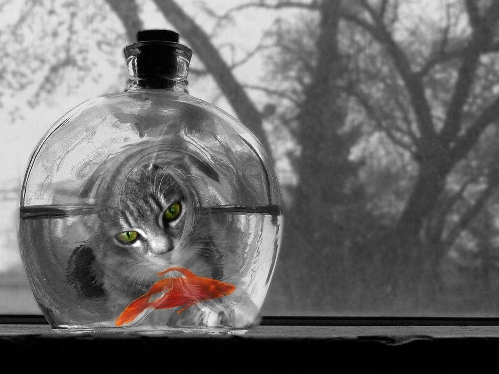 Cat And Goldfish Papel De Parede De Gato Wallpaper Gatos