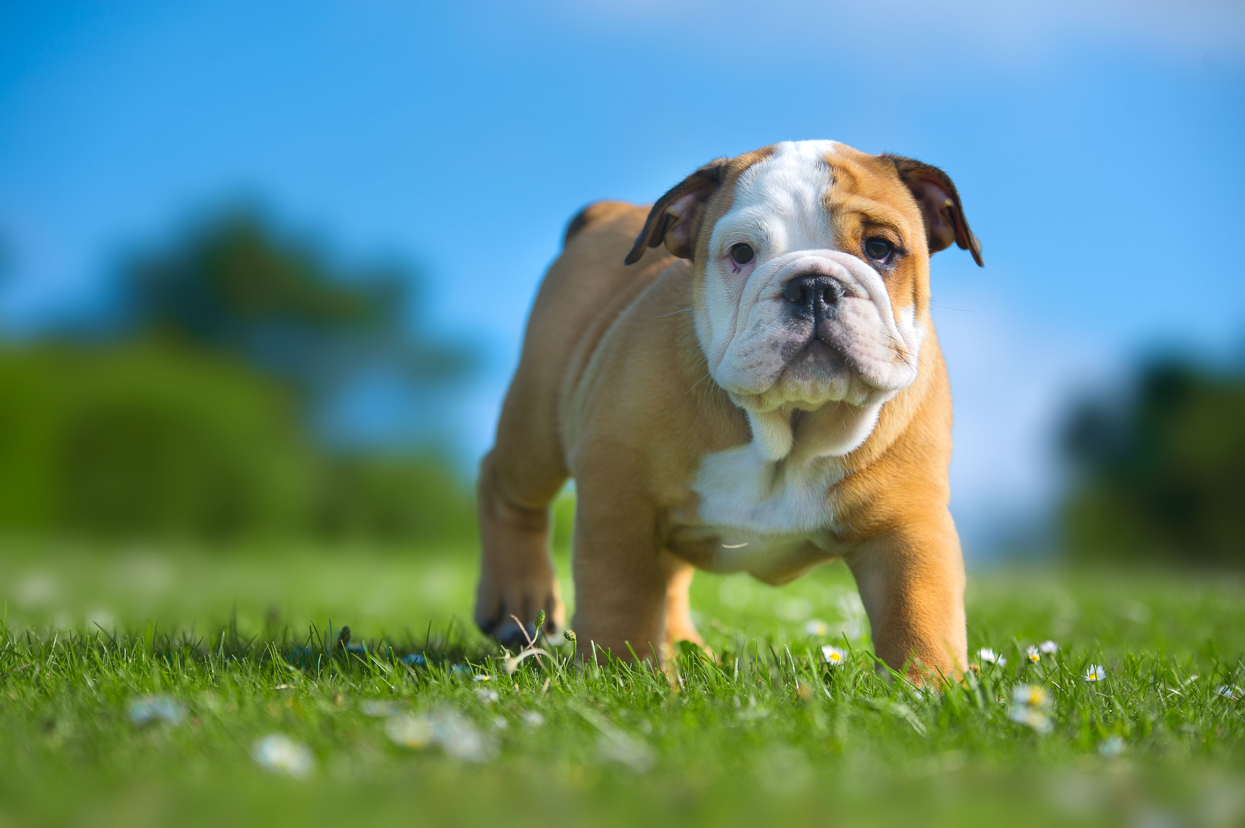 syntheticgrass your pets will love! Bulldog names, Cute