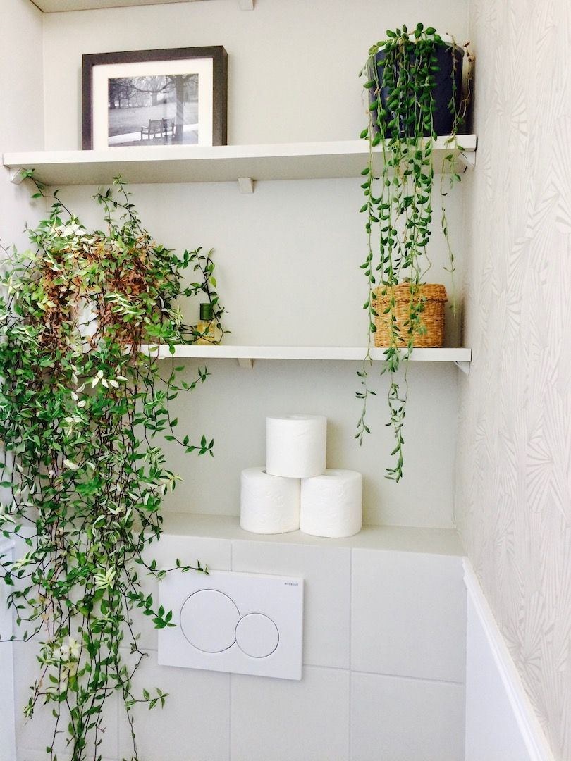 Rénovation toilettes, WC suspendus, étagères, plantes ...