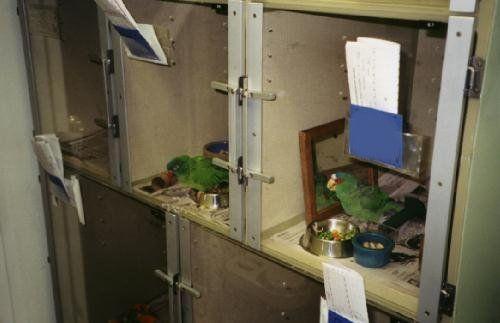 Avian Ward