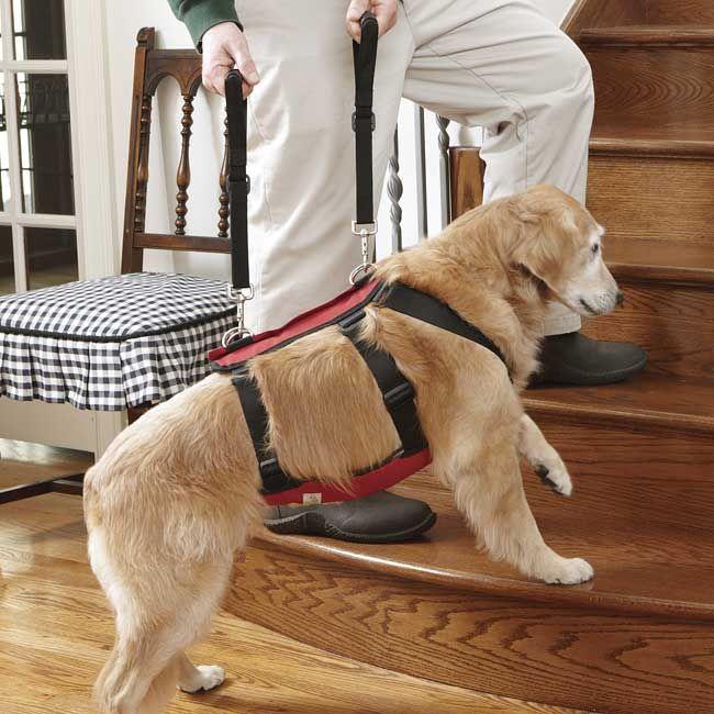 Dog Lift Dog Harness Dog Sling Dog Care