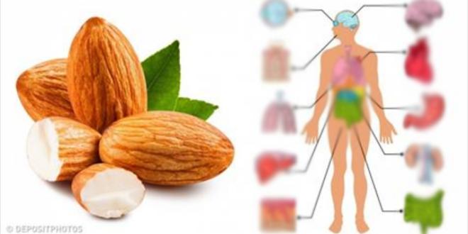 7 أشياء سوف تحدث لك إذا تناولت 4 حبات من مكسرات اللوز يوميا Food Almond