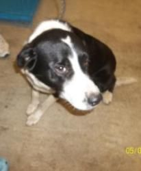 Joe Is An Adoptable Border Collie Mix Dog In Waco Tx Humane