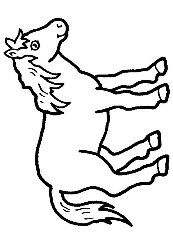 een paard zonder verdere omgeving paarden paard