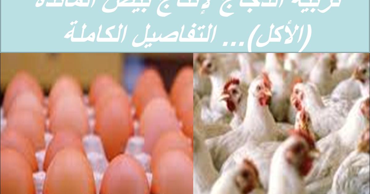 تربية الدجاج لإنتاج بيض المائدة الأكل التفاصيل الكاملة Blog Posts Vegetables Blog