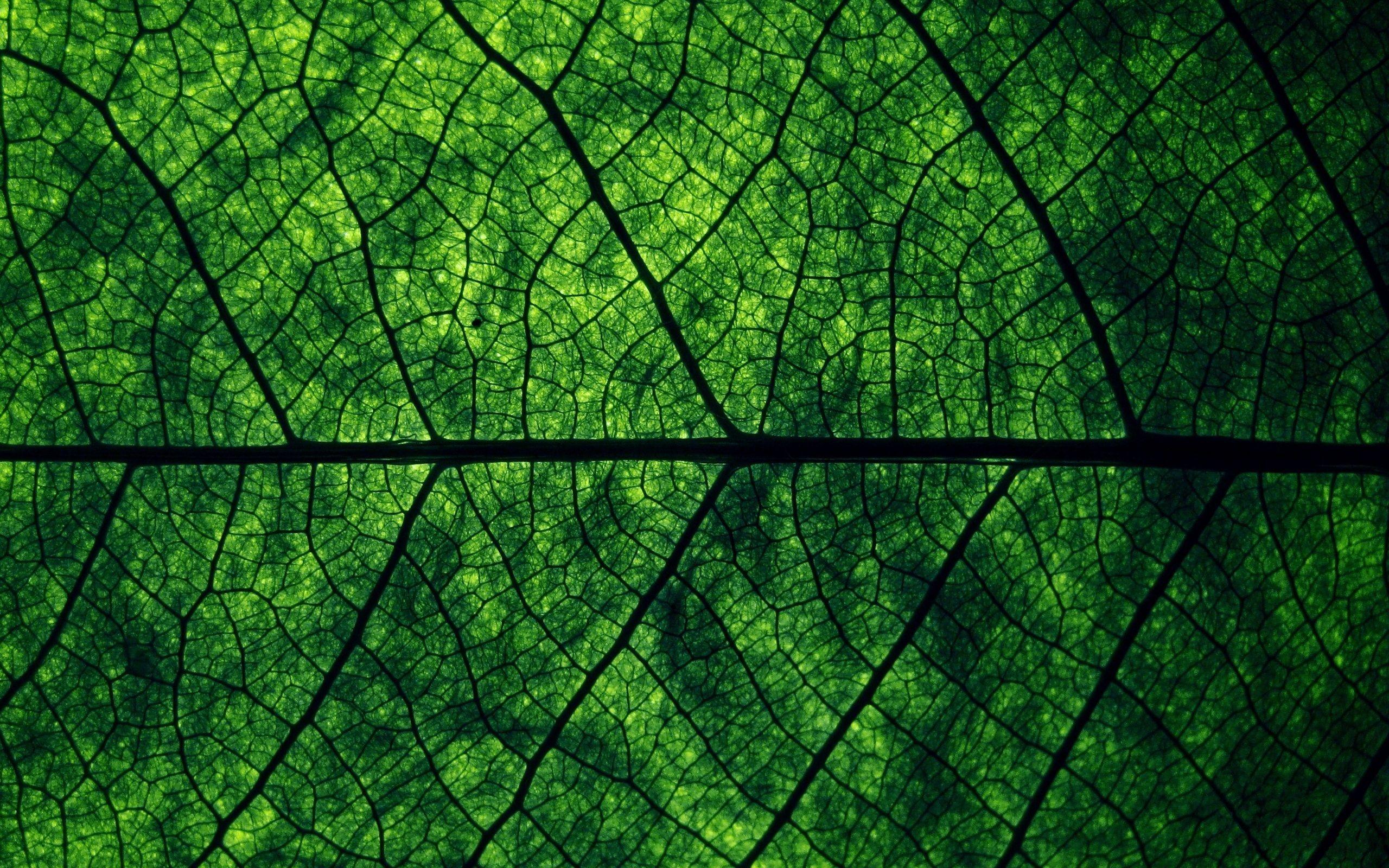 Green Leaf Makro Wallpapers 초록색 벽지 자연 배경화면 수채화