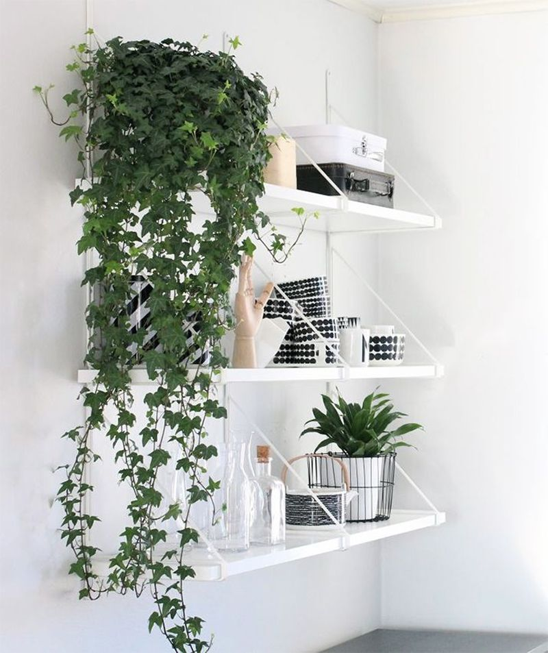 How to Decorate Your Interior with Green Indoor Plants and Save