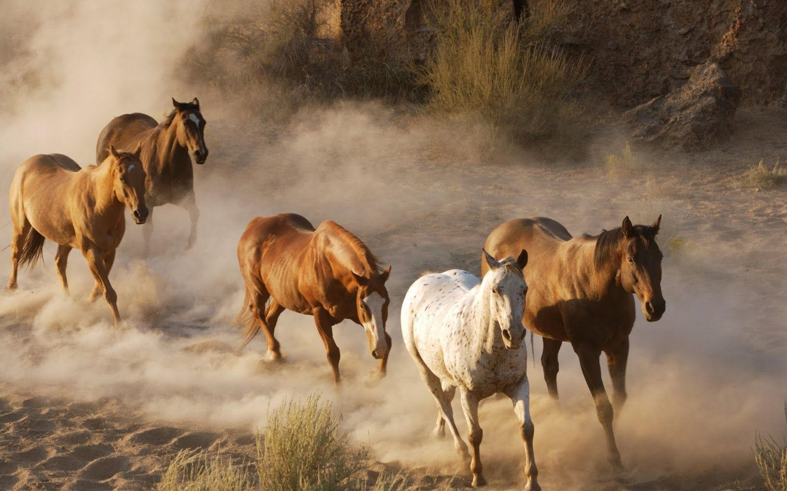 HD Animal Wallpaper With Fast Running Horses