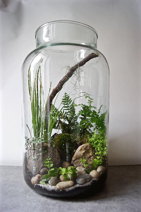 galerie terrariums plante pinterest jardins. Black Bedroom Furniture Sets. Home Design Ideas